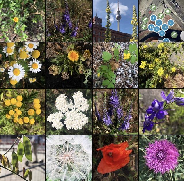 Vegetation Molkenmarkt Flora